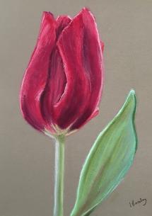 Lesley's Tulip