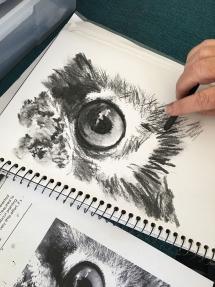 Owl eye IMG_6140