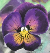 Delicious Art Class Pansy