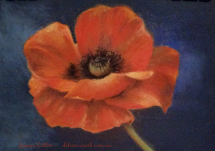Poppy by Jeanne Cotter