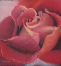 Rose by Jeanne Cotter