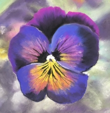 pansy 2