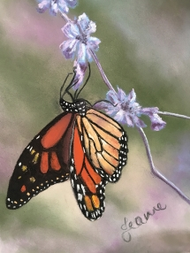 Butterfly-Floral-by-Jeanne-Cotter-2020