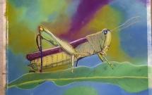Grasshopper by Lyn