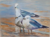 Gulls by Saleena