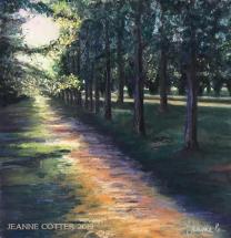 Haig Park Morning Light by Jeanne Cotter 2019 Wmark