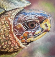 Turtle Profile by RobinO