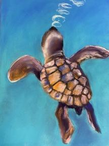 Turtle by Karen C